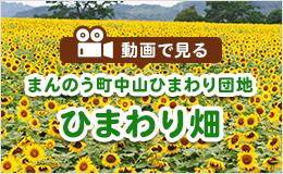 動画で見る まんのう町中山ひまわり団地 ひまわり畑